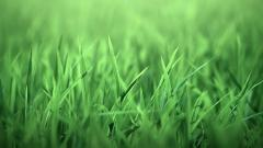 Grass Backgrounds 18859