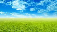 Grass Landscape Background 18871