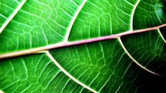 Green Macro 37258