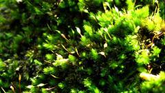 Green Macro Background 37256
