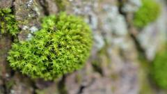 Green Macro Wallpaper 37254