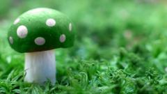 Green Mushroom Wallpaper 27503