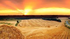Hay Fields 32990