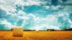 Hay Wallpaper 32979