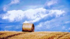 Hay Wallpaper 32980