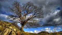 HDR Nature Wallpapers 38356