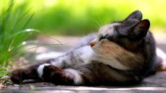 Kitten Rest Wallpaper 44711