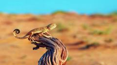 Lizard on Tree Stump Wallpaper 43763