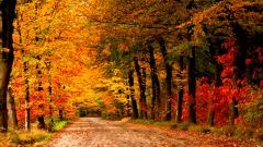 Lovely Autumn Wallpaper 44427