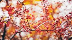 Lovely Nature Berries Wallpaper 44414