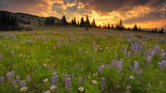 Lovely Wildflower Wallpaper 37113