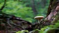 Mushroom 27507