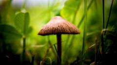 Mushroom 27509