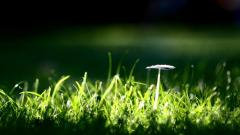 Mushroom Background 27508