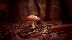 Mushroom Wallpaper 27494