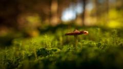 Mushroom Wallpaper 27506