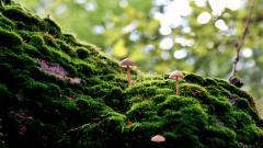 Mushroom Wallpaper HD 27505