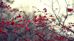 Nature Berries Wallpaper 44420