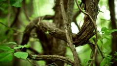 Nature Branches Wallpaper 44911