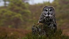 Owl on Tree Stump Wallpaper 43762