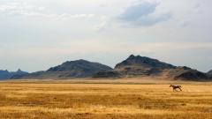 Prairie 33001