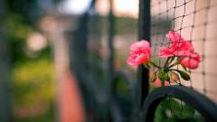 Pretty Flowers Fence Wallpaper 44860