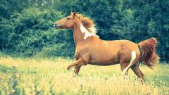 Pretty Horse Field Wallpaper 44833