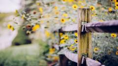 Pretty Nature Fence Flowers Wallpaper 44971