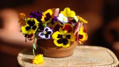 Pretty Pansy Flowers Wallpaper 43225