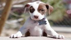 Puppy 25160