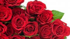 Roses Wallpaper 26097