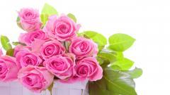 Roses Wallpaper 26099
