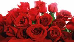 Roses Wallpaper 26100