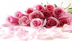 Roses Wallpaper 26102