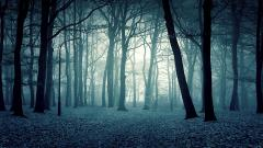 Scary Forest Wallpapers 21522
