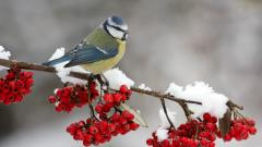 Snow Bird Wallpaper 38531
