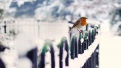 Snow Bird Wallpaper 38532