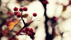 Tree Berries Wallpaper 44423