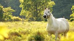 White Horse 25696