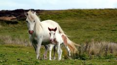 White Horses Field Wallpaper 44834