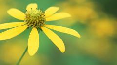 Wildflower 37089