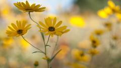 Wildflower 37103