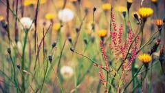 Wildflower Background 37094