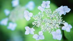 Wildflower Wallpaper 37082