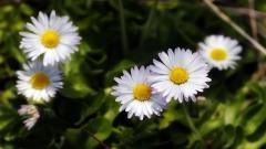 Wildflower Wallpaper 37092