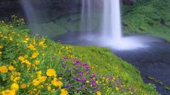 Wildflower Wallpaper 37108