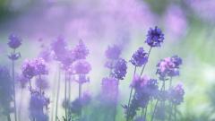 Wildflower Wallpapers 37085
