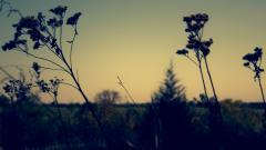 Wildflower Wallpapers 37106