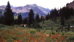 Wildflowers 37099
