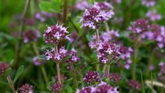 Wildflowers 37102